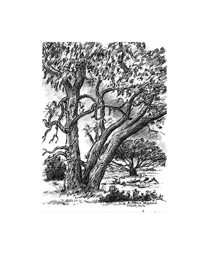 """Bild """"In der Heide"""" (2006) - aus Bilderzyklus """"Moener Tagebuch"""", ungerahmt"""