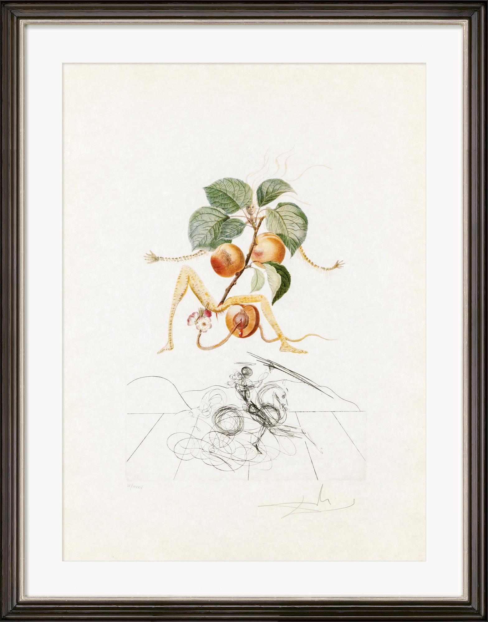 """Bild """"Abricot Chevalier"""" (1969)"""