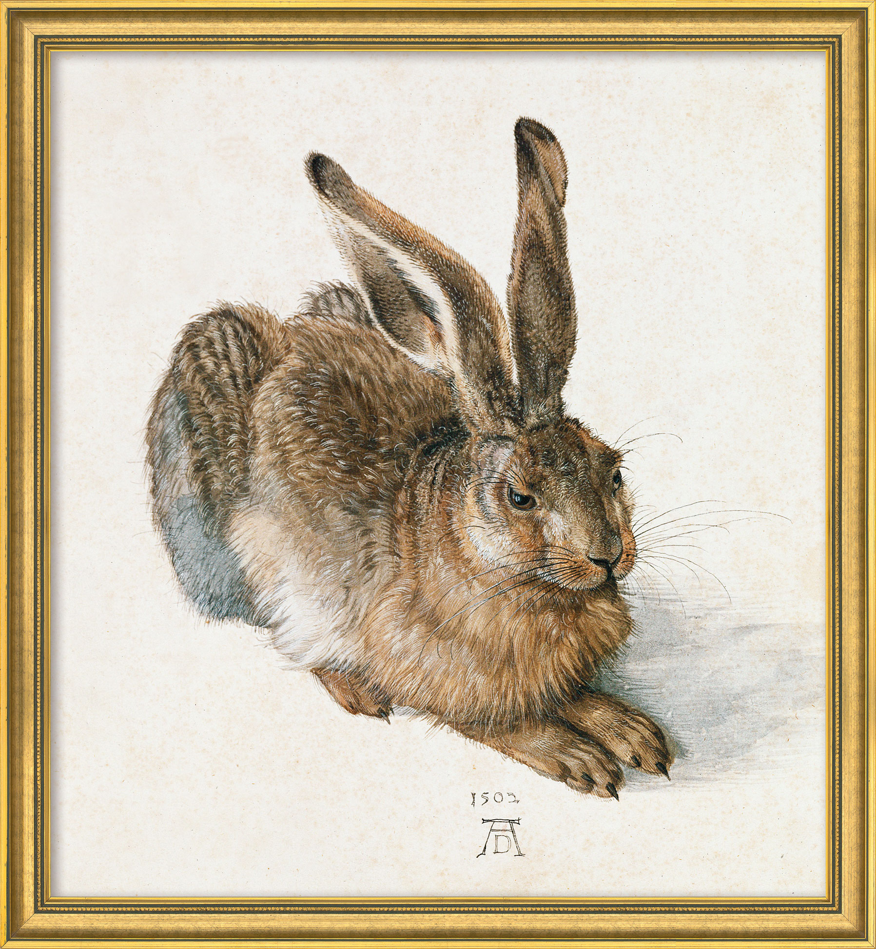 "Bild ""Junger Feldhase"" (1502), Version goldfarben gerahmt"