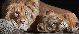 """Bild """"Löwen"""", auf Keilrahmen"""