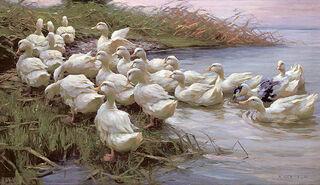 "Bild ""Enten am Seeufer"", auf Keilrahmen"