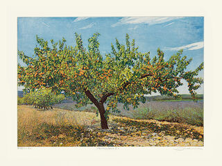 "Bild ""Aprikosenbaum I"", ungerahmt"